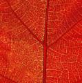 Autumn Leaf by David Nunuk