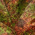 Autumn Leaf Detail by Roger Passman