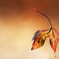 Autumn Leaf Fallen by Kaye Menner