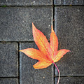 Autumn Leaf by Framing Places