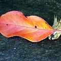 Autumn Leaf In August by William Tasker