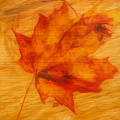 Autumn Leaf On Wood by Dan Sproul