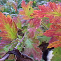Autumn Leafs by David Du Hempsey
