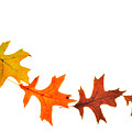 Autumn Leaves 1 by Mark Fuller