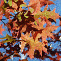 Autumn Leaves 17 - Variation  1 by Jean Bernard Roussilhe