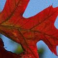 Autumn Leaves 18 by Jean Bernard Roussilhe