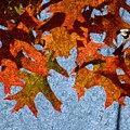 Autumn Leaves 20 by Jean Bernard Roussilhe