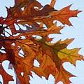Autumn Leaves 21 by Jean Bernard Roussilhe