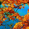 Autumn Leaves 7 by Jeelan Clark