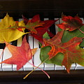 Autumn Leaves - A Love Song by Dora Sofia Caputo Photographic Design and Fine Art