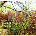 Autumn Leaves Against A Fence by Joan  Minchak