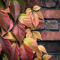 Autumn Leaves Against Brick Wall by Julie Palencia