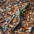 Autumn Leaves And Roots by Helen Northcott