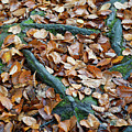 Autumn Leaves And Roots IIi by Helen Northcott