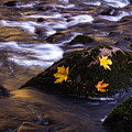 Autumn Leaves by Anthony Michael Bonafede