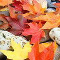 Autumn Leaves Art Print Coastal Fossil Rocks Baslee Troutman by Baslee Troutman