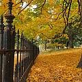 Autumn Leaves At Lafayette Park by Debbie Fenelon