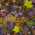 Autumn Leaves At Side Of Road by John Hansen