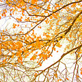 Autumn Leaves by Az Jackson