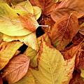 Autumn Leaves by Carlos Caetano