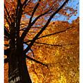 Autumn Leaves by Debbie Nobile