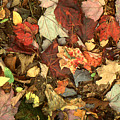 Colorful Autumn Leaves In Blue Green Red Yellow Orange by Peter Potter