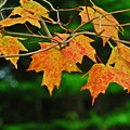 Autumn Leaves by Heather Rose