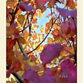 Autumn Leaves In Blue Sky by Felipe Adan Lerma
