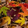 Autumn Leaves by James BO  Insogna