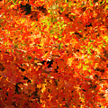 Autumn Leaves by James E Weaver