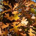 Autumn Leaves by Joanne Smoley