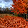 Autumn Leaves by Joe  Ng