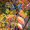 Autumn Leaves by Karin  Dawn Kelshall- Best