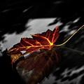 Autumn Leaves... by Lena Monteiro