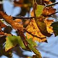 Autumn Leaves Macro 1 by Linda Brody