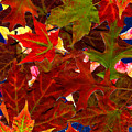 Autumn Leaves by Nancy Mueller