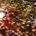 Autumn Leaves Reflections by Nancy Mueller