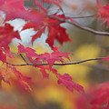 Autumn Leaves by Richard Pope