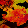 Autumn Leaves by Robert Morin