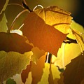 Autumn Leaves by Sharon Talson