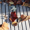 Autumn Leaves Three by Amy Wilkinson