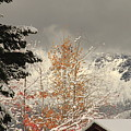Autumn Leaves Winter Snow by Diane Zucker