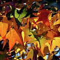 Autumn Leaves2 by Diamond Bitzer