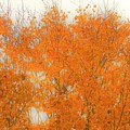 Autumn Leaves2 by Merle Grenz