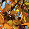 Autumn Leaves4 by Diamond Bitzer