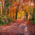 Autumn Light by Liam Mcclean