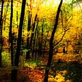 Autumn Light by William Carroll