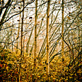 autumn Lines by Maggie Terlecki