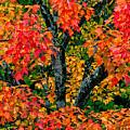 Autumn Maple Bark by Shell Ette
