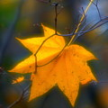 Autumn Maple Leaf by Igor Malinovskii